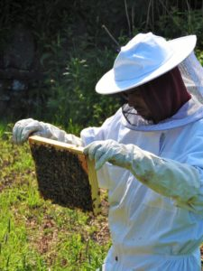Everything You Need to Know About Bee Propolis in Skin Care